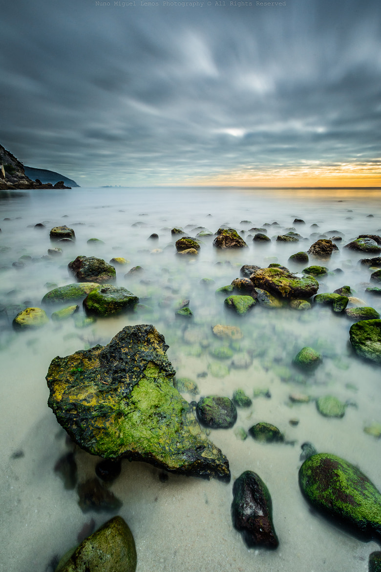 Photograph low tide green by Nuno Lemos on 500px
