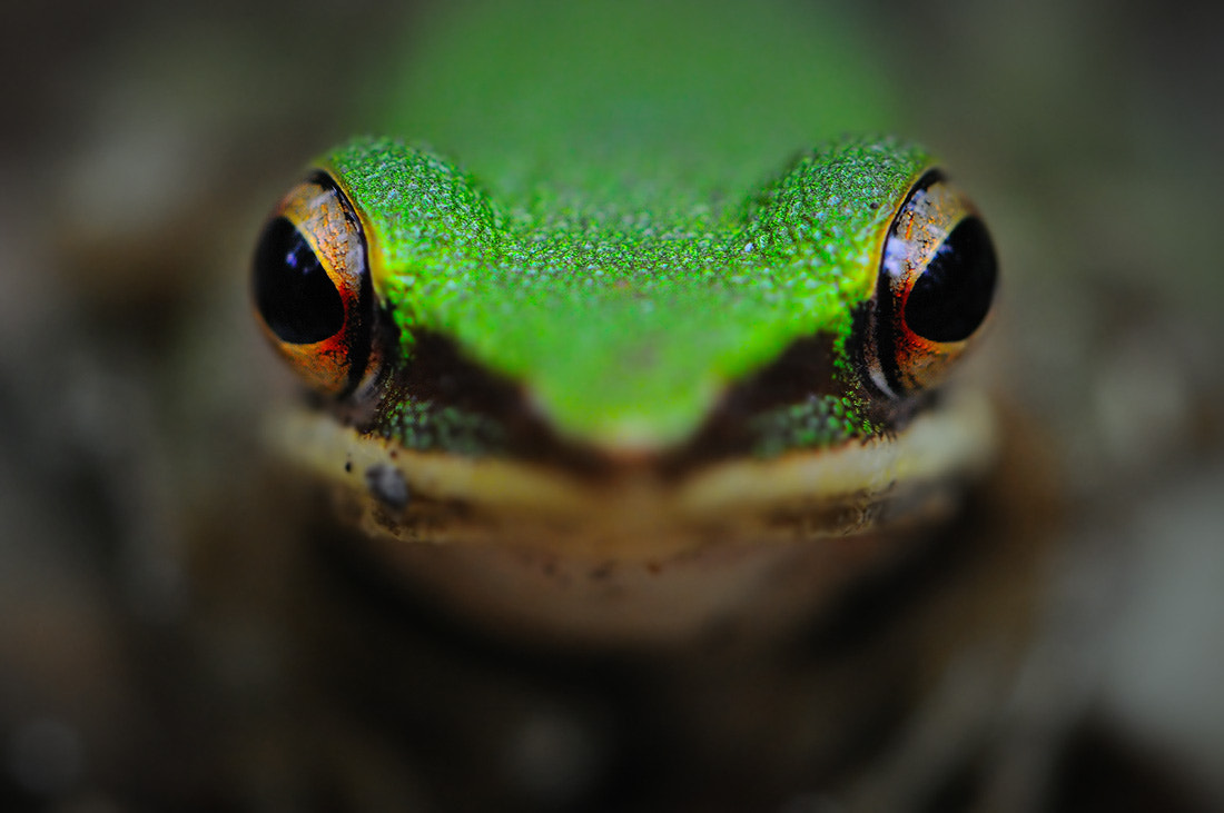 Photograph Flog Eye by Navin Nowvapong on 500px