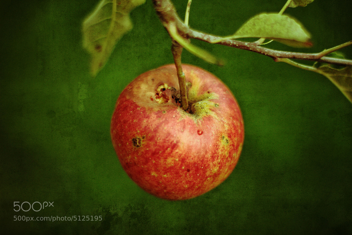 Photograph Apfel by Matthias He on 500px