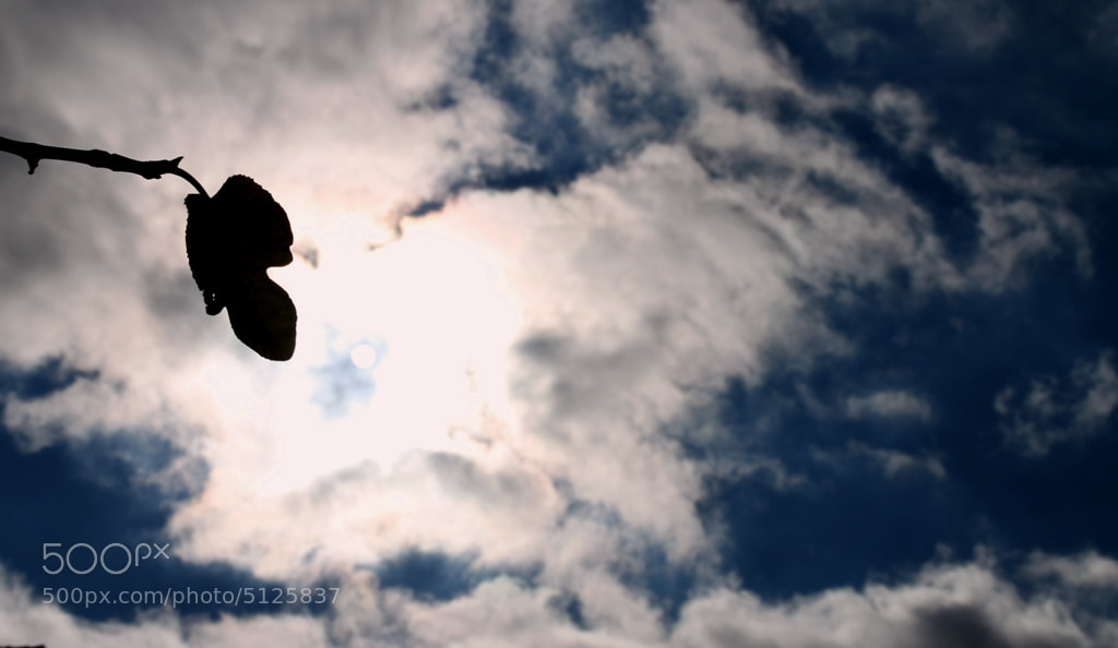 Photograph ... Reaching For The Sky ... by Maria  Ferreira on 500px