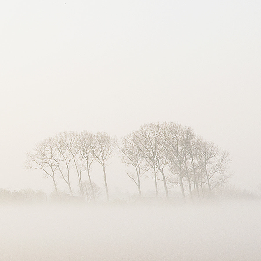 Photograph A misty morning II by Pascale schotte on 500px