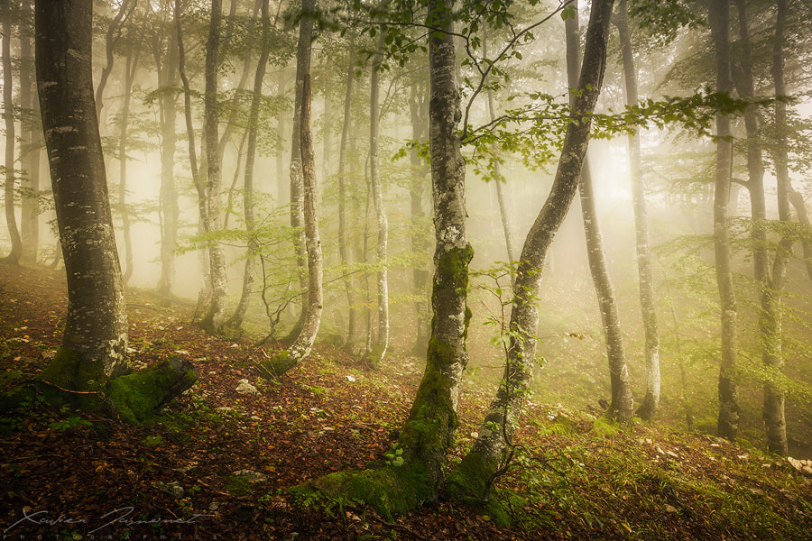 Photograph Tell me about the forest... by Xavier Jamonet on 500px