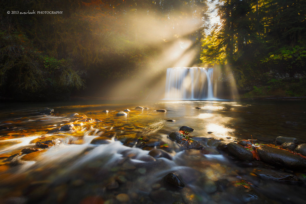 Photograph Shine by Dylan Toh  & Marianne Lim on 500px