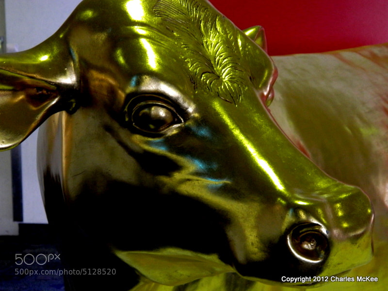 Photograph Golden  Calf by Charlie Mckee on 500px