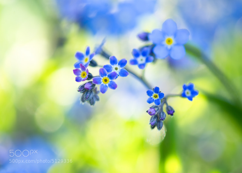 Photograph Forget me not Canvas Blue Color abstract photos : Blue is Bleu