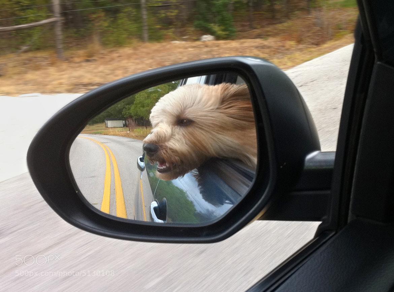 Photograph Through an open window my fur blows... by Ellen Yeates on 500px