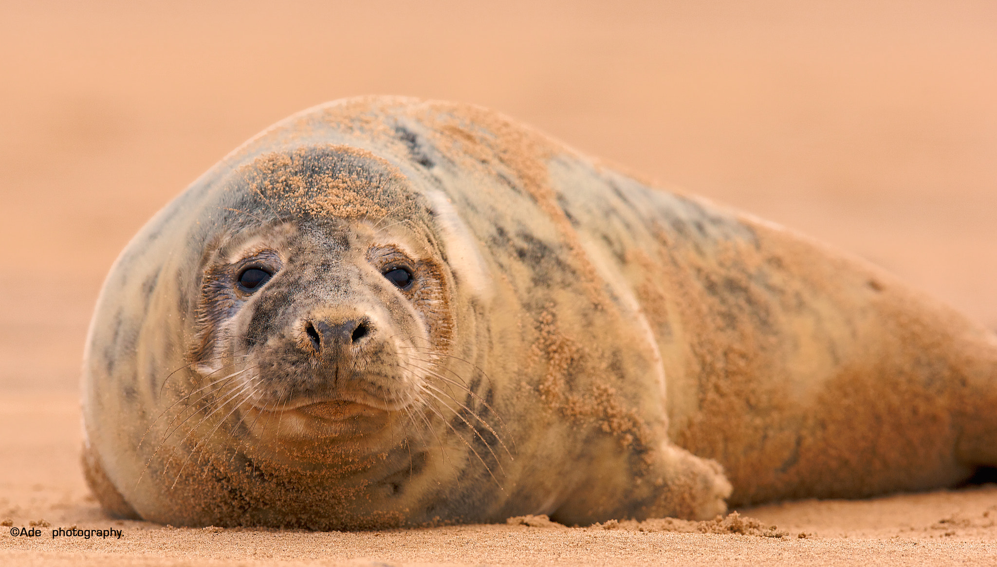 Photograph Grey Seal by Ade Photography on 500px