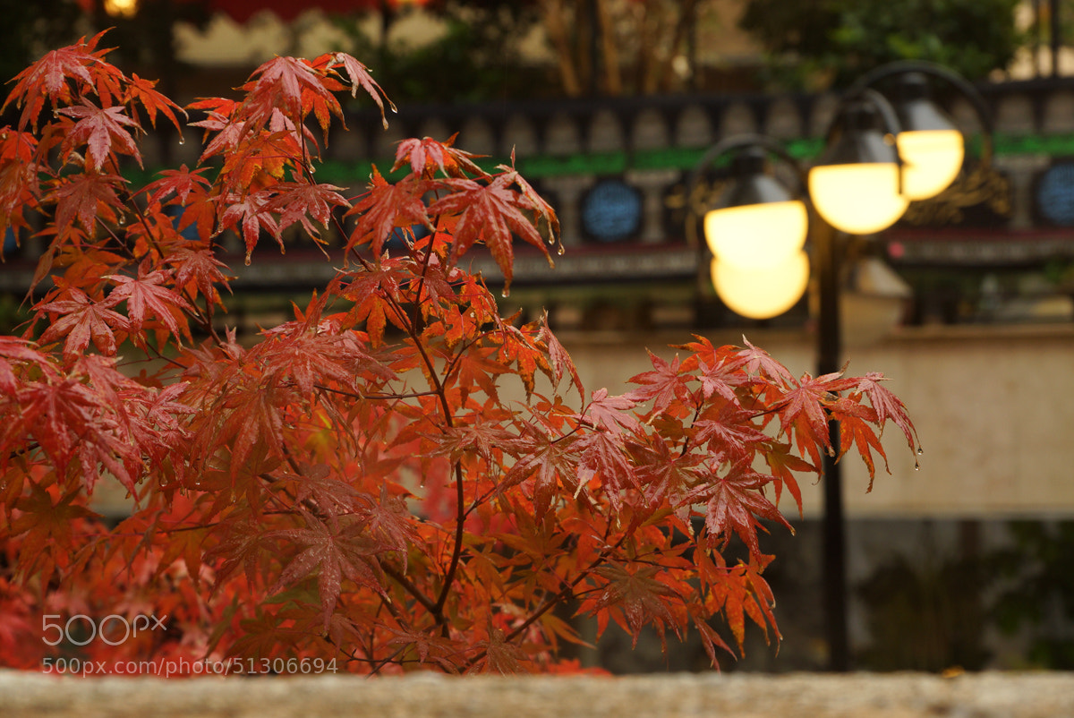 Photograph ~Autumn Rain~ by S'Mojtaba Hosseini on 500px