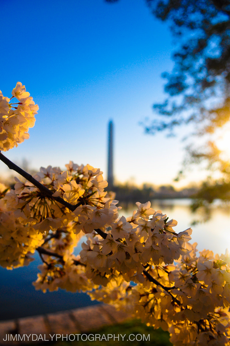 Photograph Cherry Blossoms in Washington, DC by Jimmy Daly on 500px