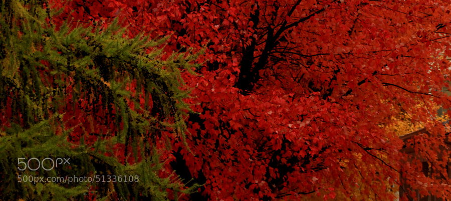 Rainy November by Jeff Carter on 500px.com