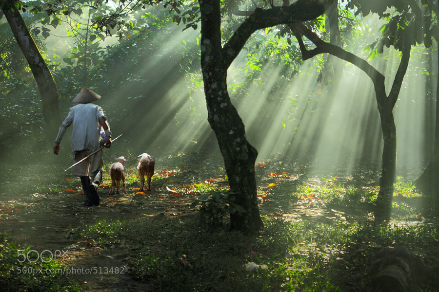 Photograph Accompanied By Two Male Goat by dewan irawan on 500px