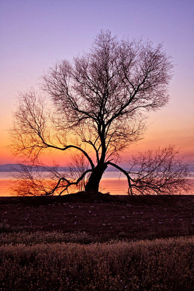 Photograph lone tree by Nikos Metaxiotis on 500px