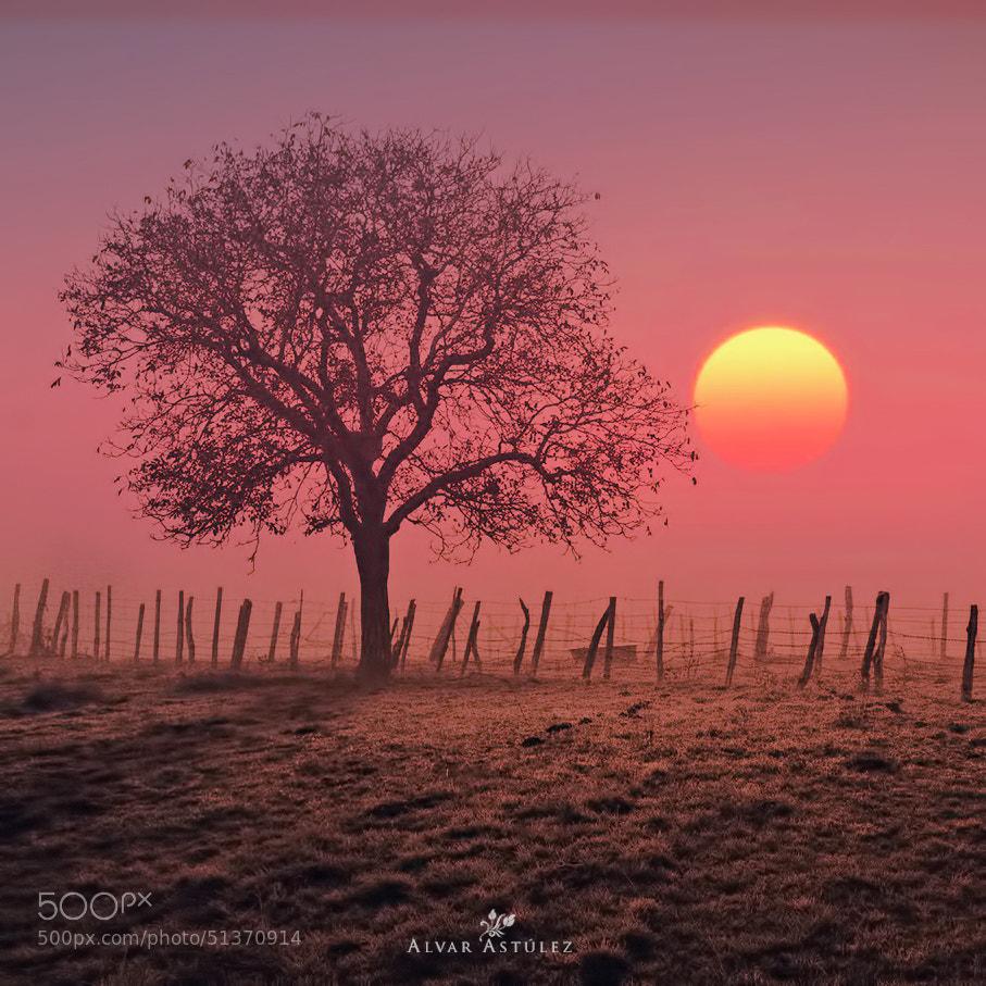Photograph Sunset by Alvar Astúlez on 500px