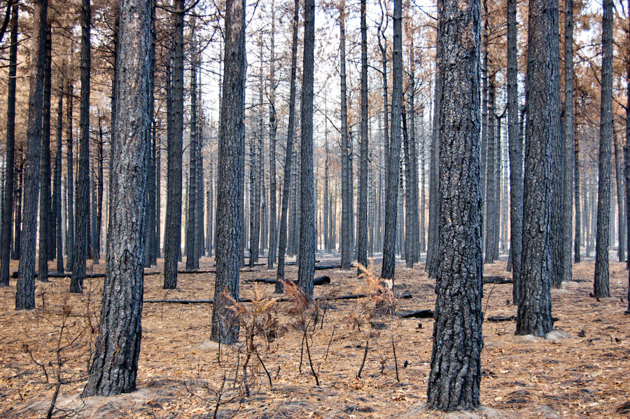 Photograph Forest Fire by Koert Tomasini on 500px