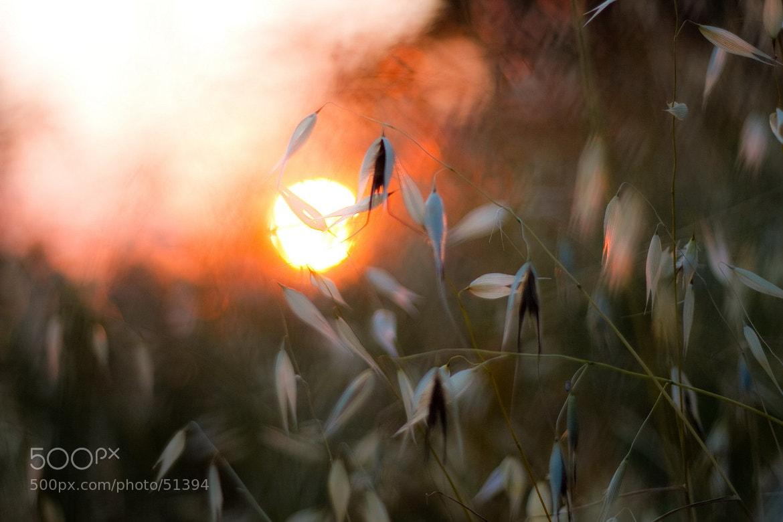 Photograph закатные наброски by Julia Roze on 500px
