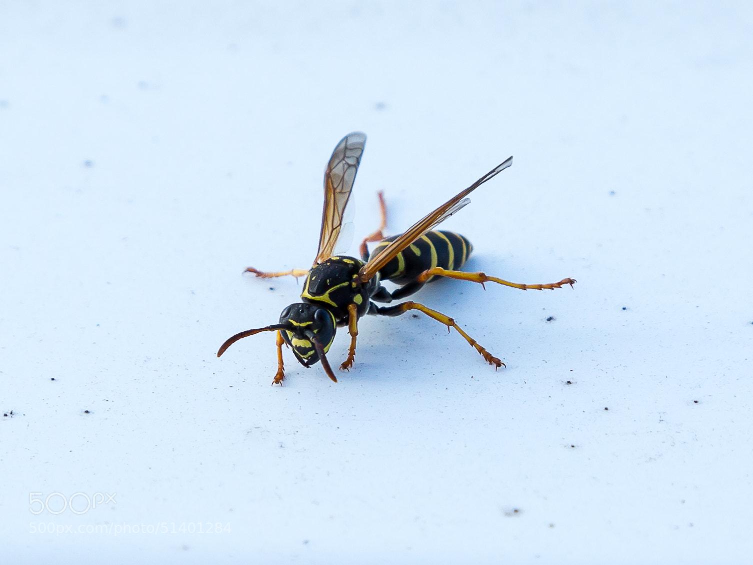 Photograph bug by Maxim Mironov on 500px