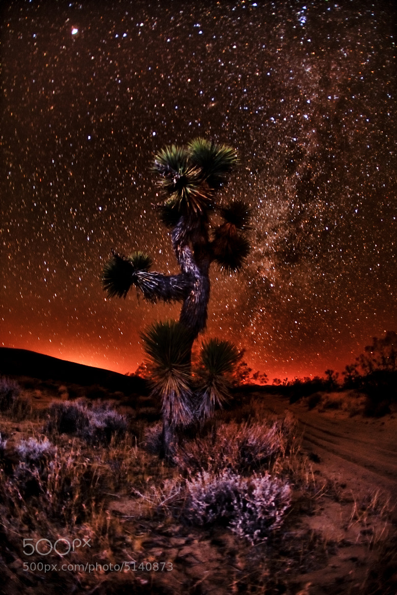 Photograph Joshua Tree at Night by Shane Lund on 500px