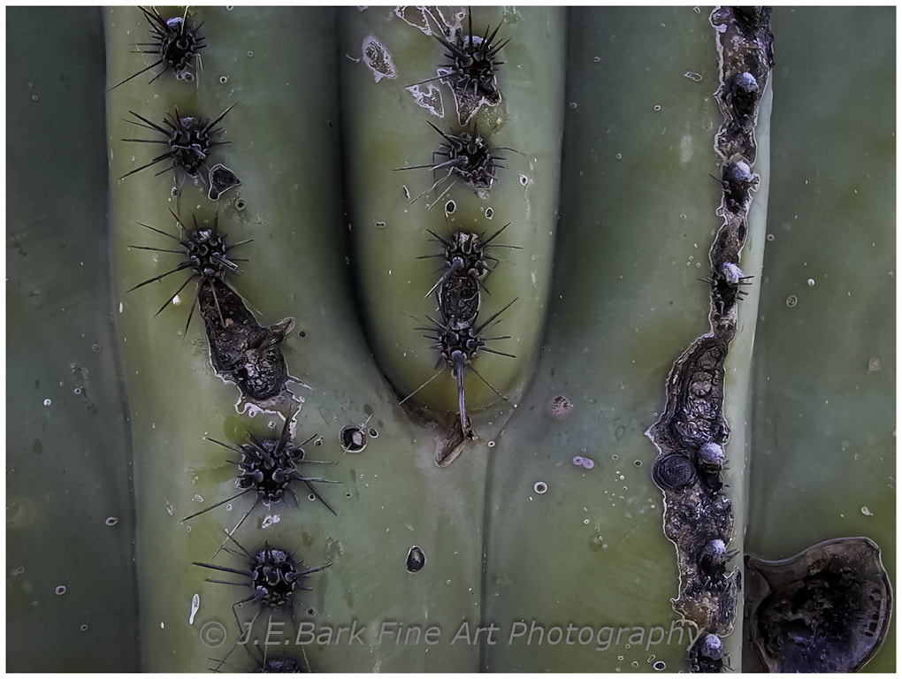 Photograph Cactus by J. E. Bark on 500px
