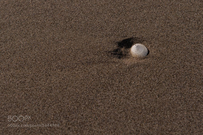 Photograph Undisturbed Seashell by Mark Ellison on 500px