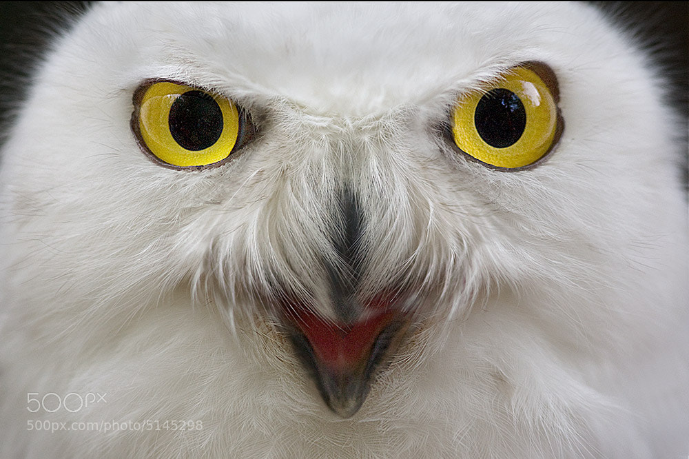 Photograph The eyes by Stefano Ronchi on 500px