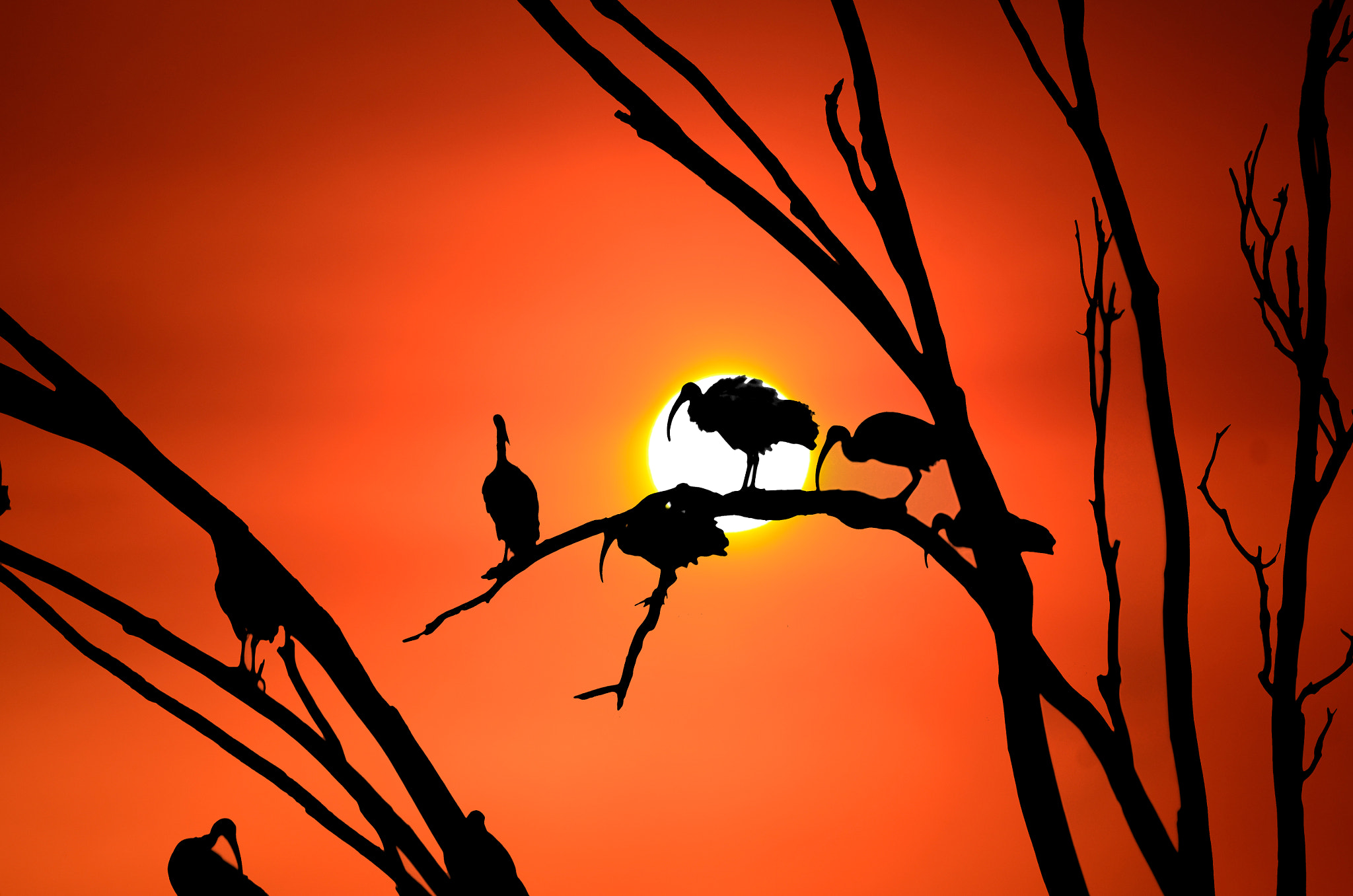 Photograph IBIS Sunset 2 by KVlion Photo's on 500px