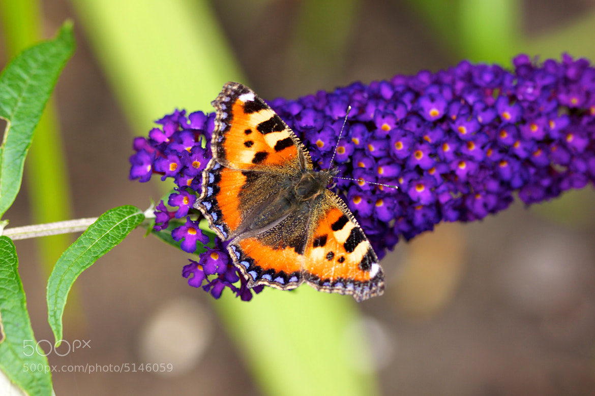 Photograph Tortoiseshell by Jan Saarloos on 500px