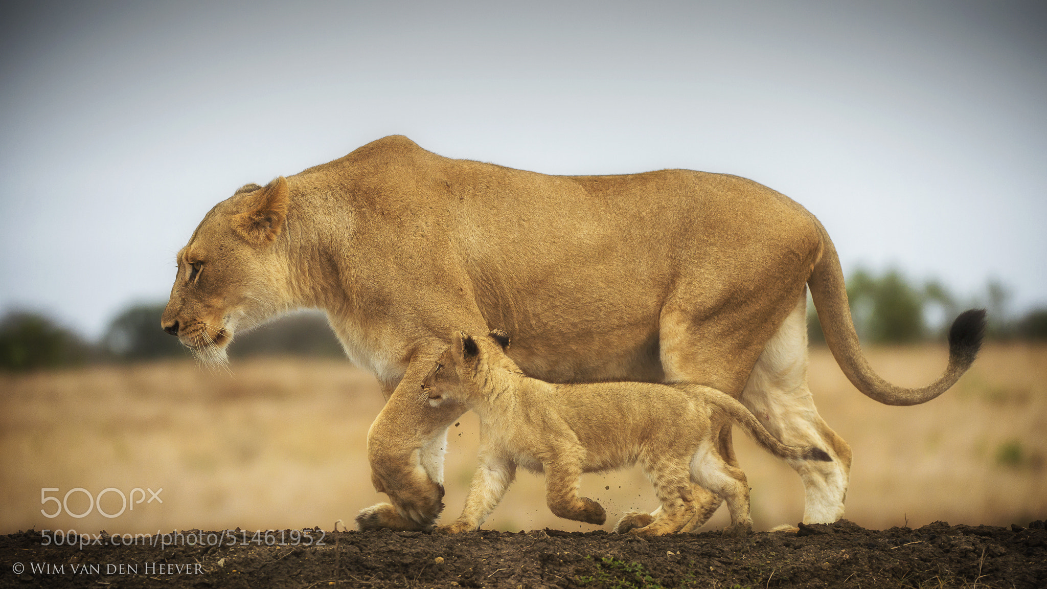 Photograph One Day When I'm Big... by Wim van den Heever on 500px