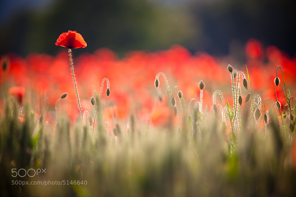 Photograph Red one by Michel Delli on 500px