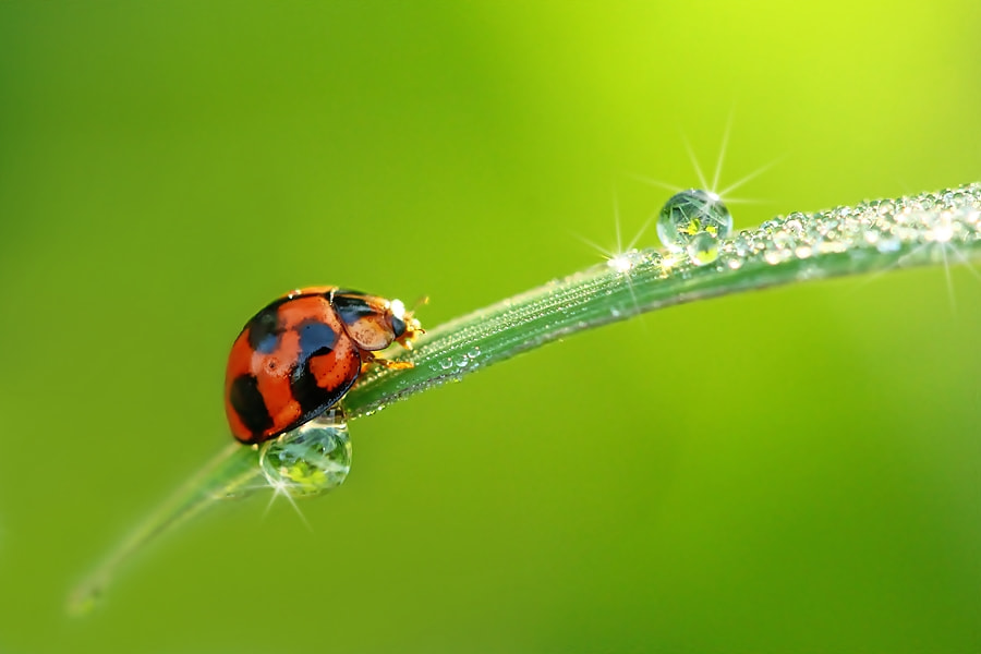Photograph Me and Morning dew by Dewa Gsp on 500px