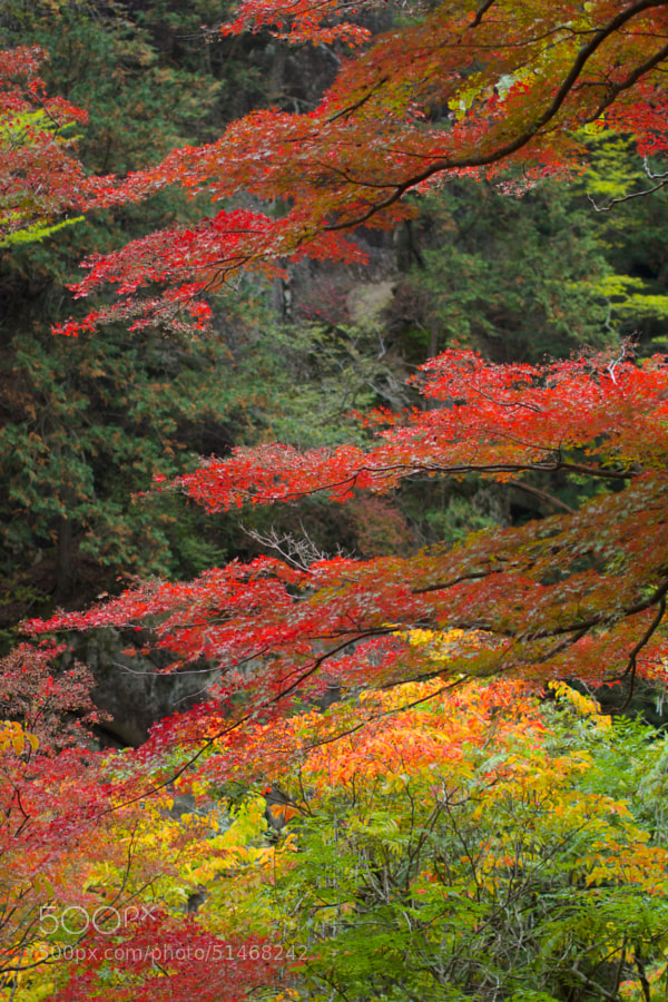 SHOSENKYO_Ravine in the autumn of 2013 by masayuki_ij on 500px.com