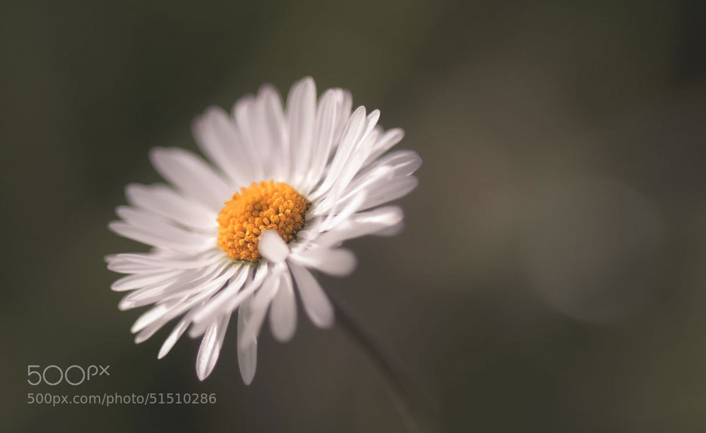 Photograph Like spring today by Photographix_by_Moni on 500px
