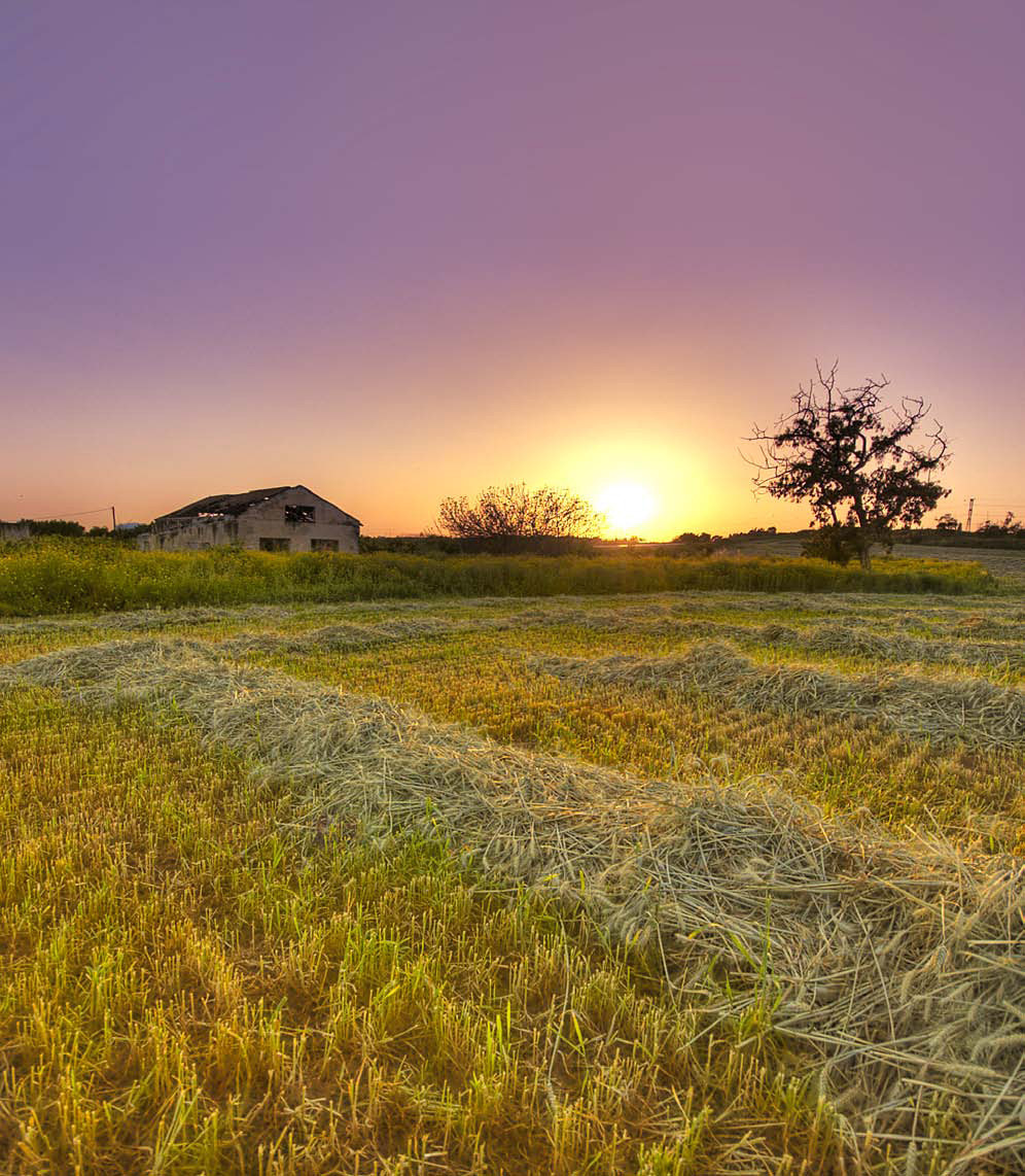 Photograph Naan Fields by Adam Shul on 500px