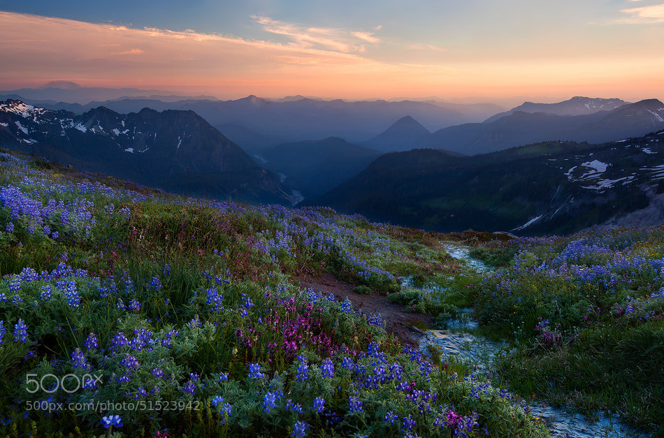 Photograph Summer's Deliverance by Trevor Anderson on 500px