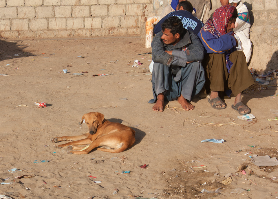 Photograph Street Dog or Man's Best Friend by Saifuddin Abbas on 500px