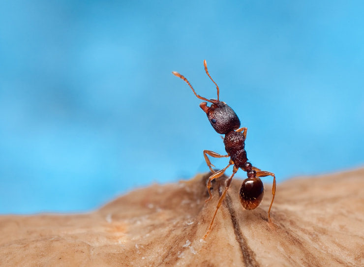 Photograph Ant by Soheil Shahbazi on 500px