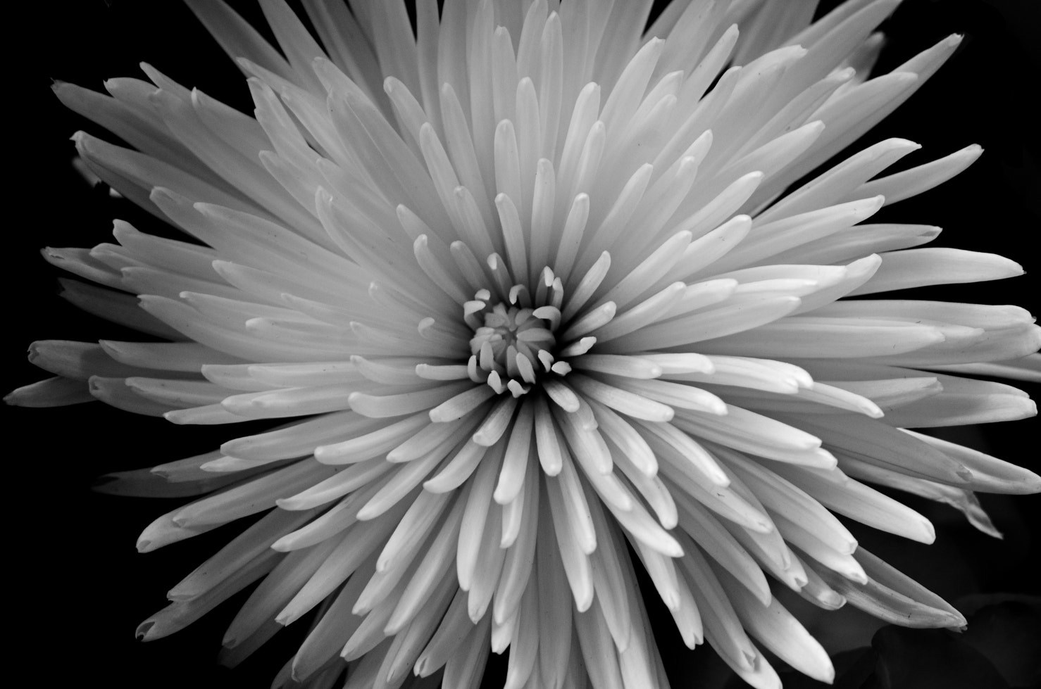 Photograph starburst by Darrin Snyder on 500px