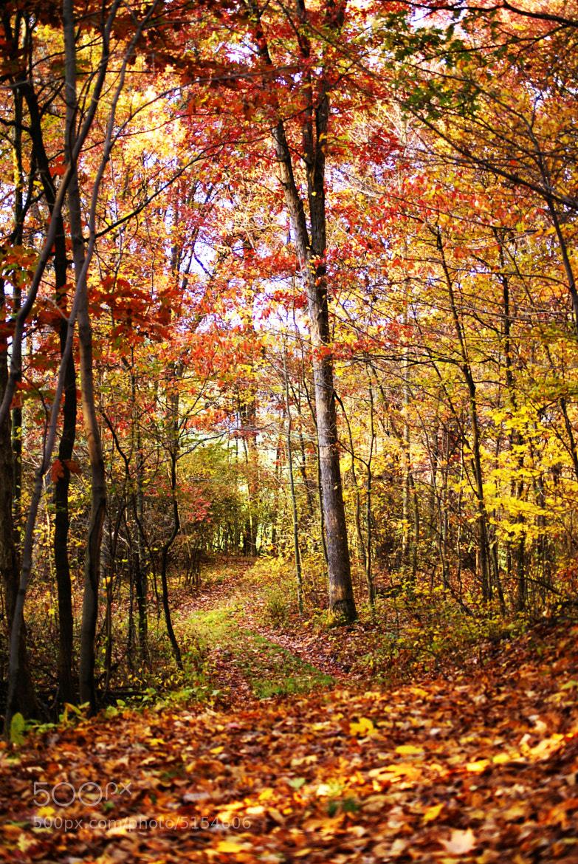 Photograph Fall Wonderland by Erika Kraus on 500px