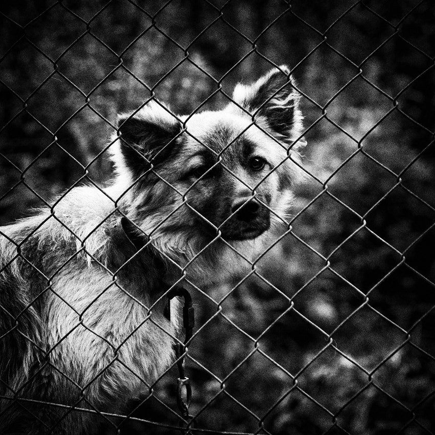 Photograph Behind the fence by Andrea Jancova on 500px
