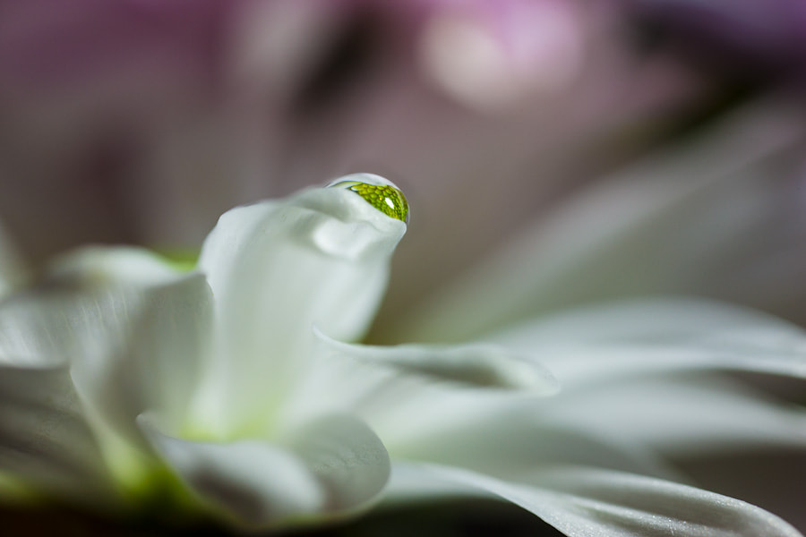 Photograph Eye of the Flower by Patti Schulze on 500px