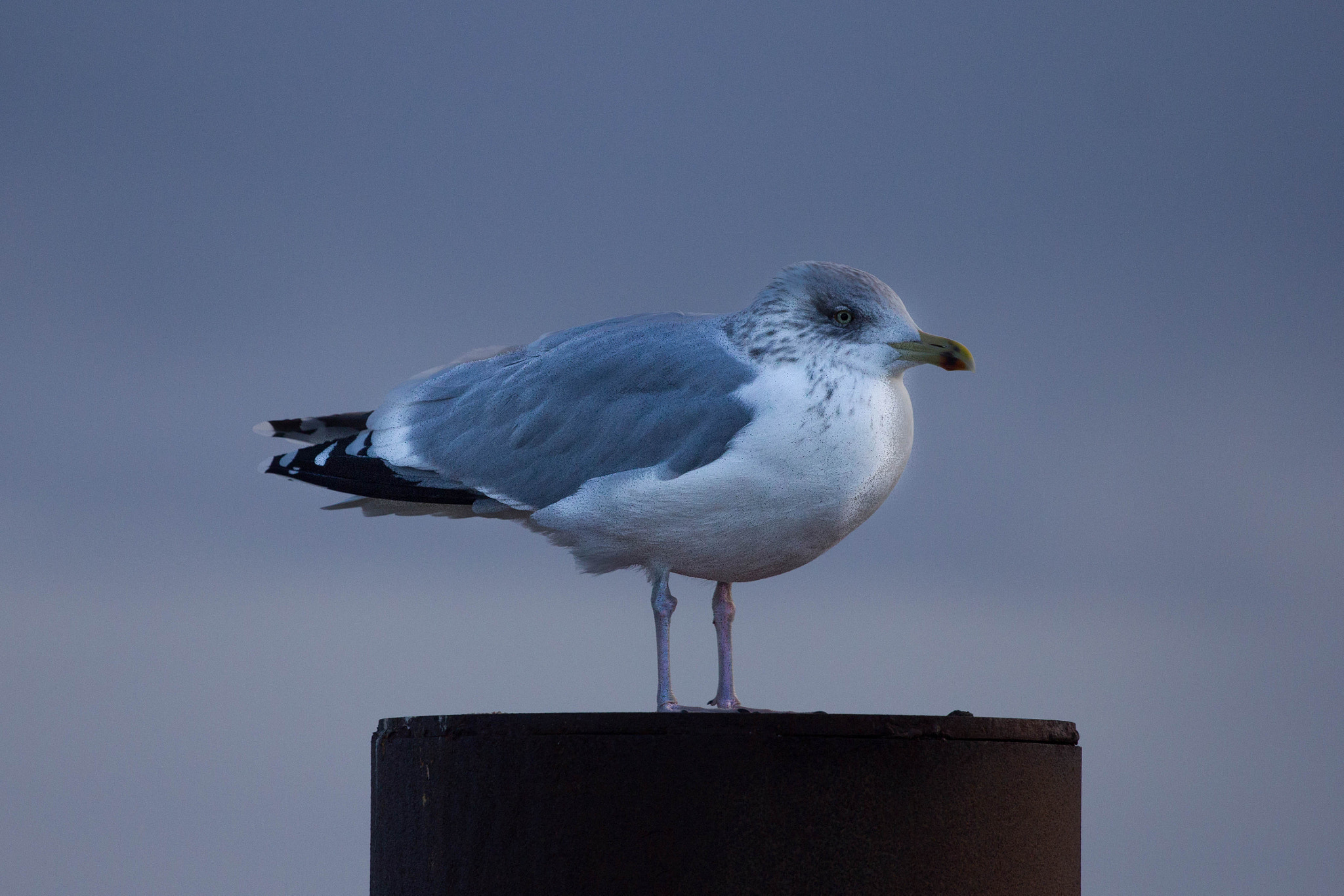Photograph Seagull 2 by Heike Kitzig on 500px