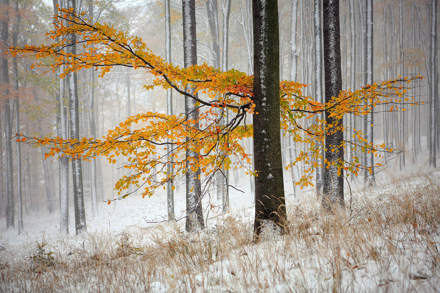 Photograph Winter is Coming by Michal Vitásek on 500px