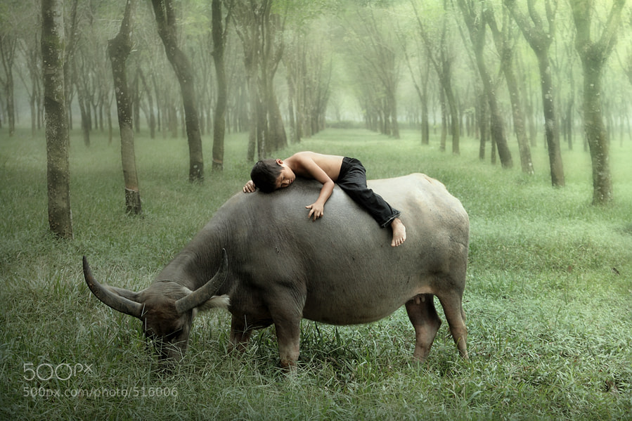 Photograph Fast Asleep by dewan irawan on 500px
