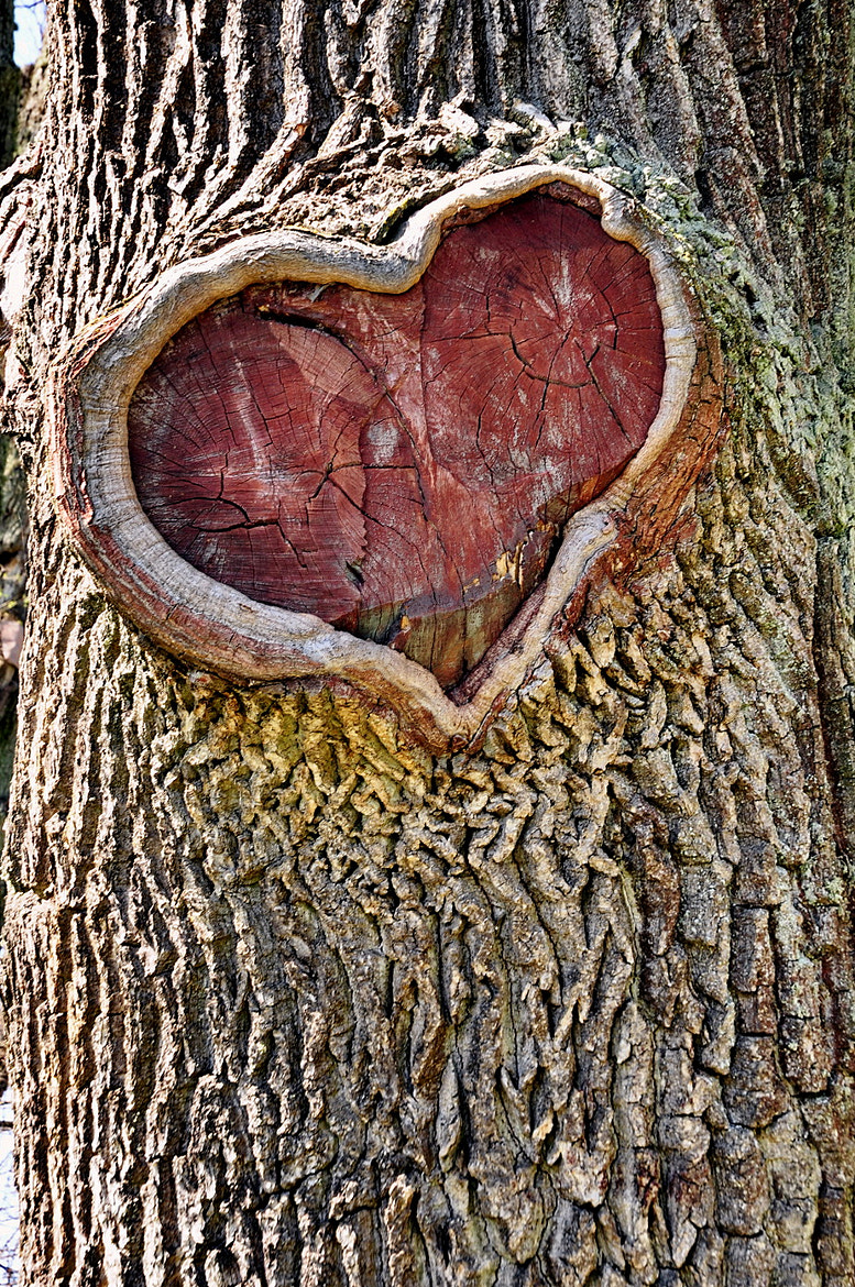 Photograph The heart of the tree by Yakov Volkind on 500px