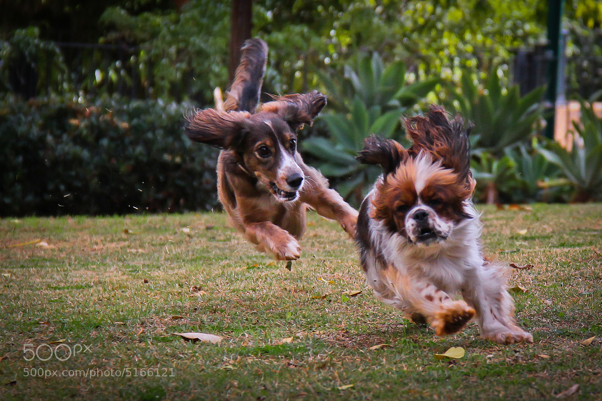 Photograph Chase by Rotem Littman on 500px