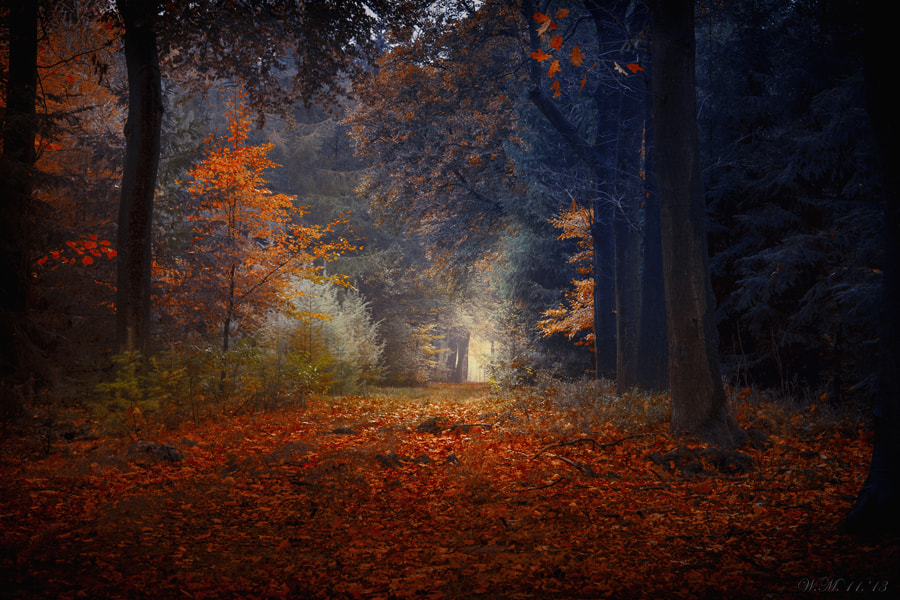 """Photograph """"Autumn expression"""" by Wil Mijer on 500px"""