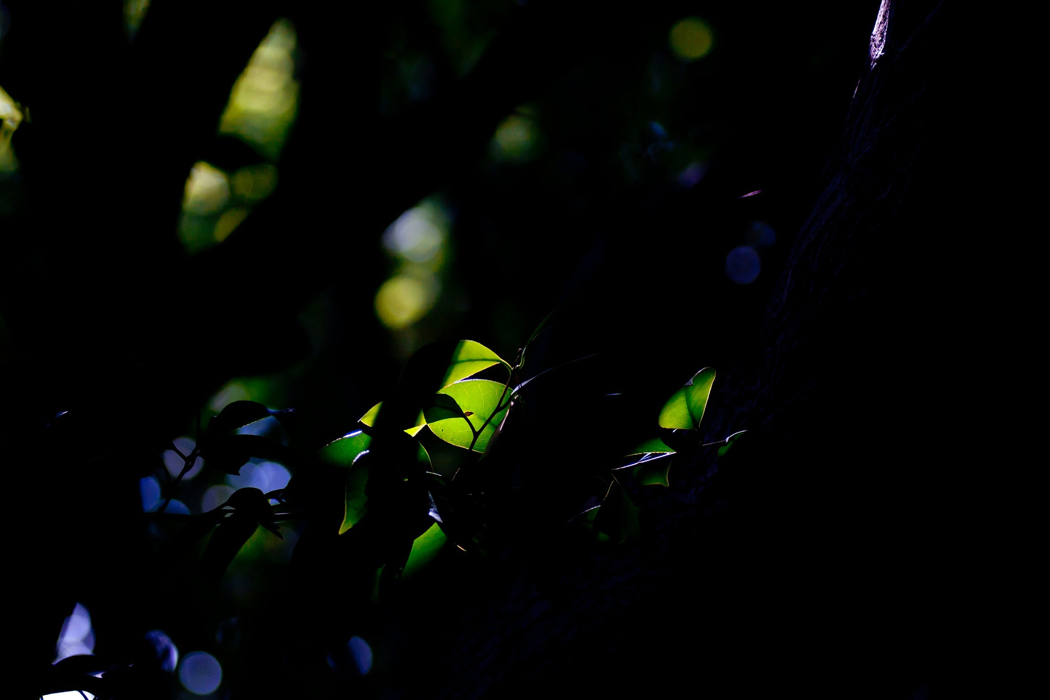 Photograph green/another light by Ryota Shimizu on 500px