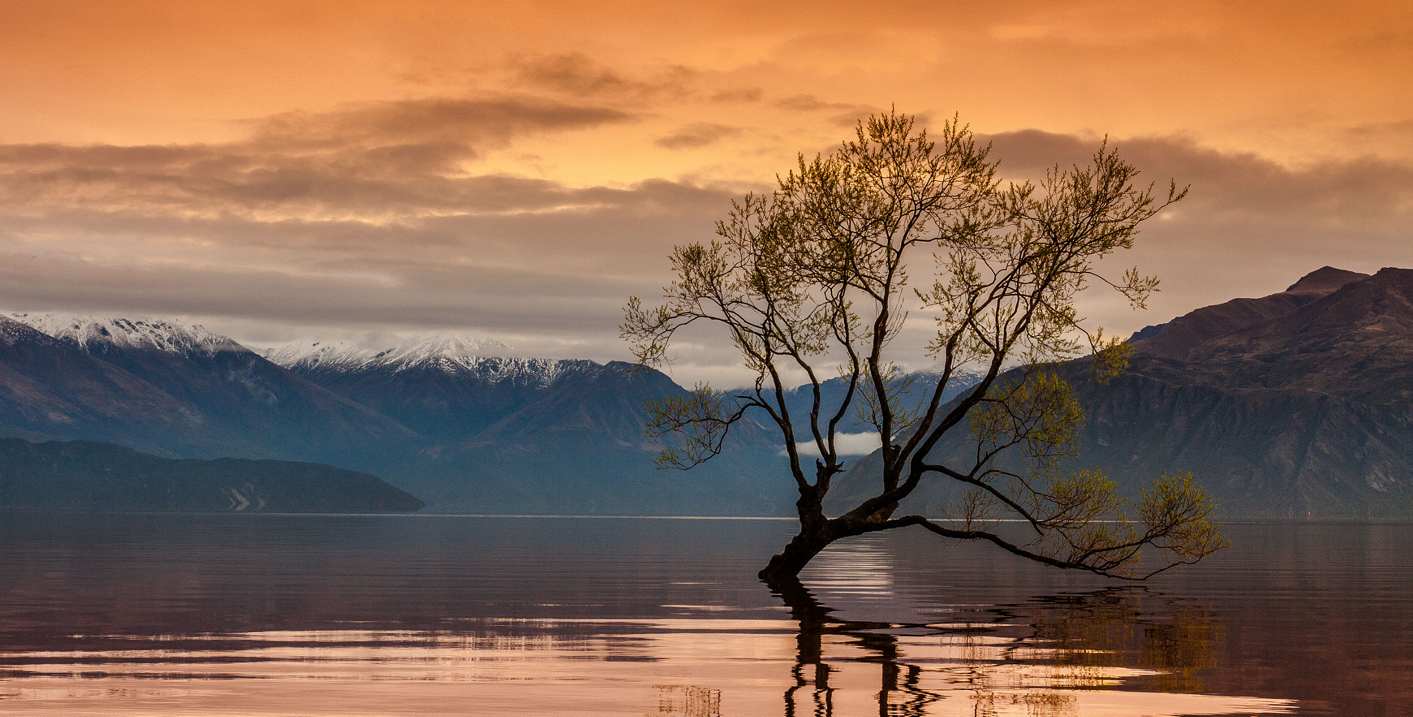 Photograph 'The Lake Tree' by Jason Rosewarne on 500px