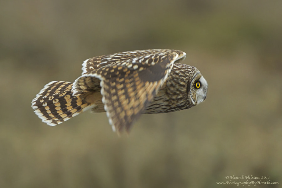Photograph SEO in Flight by Henrik Nilsson on 500px