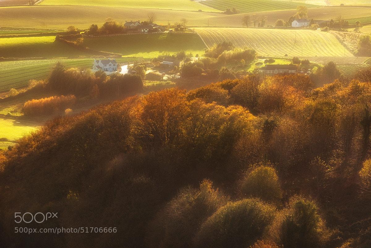 Photograph Tree House by Lukasz Maksymiuk on 500px