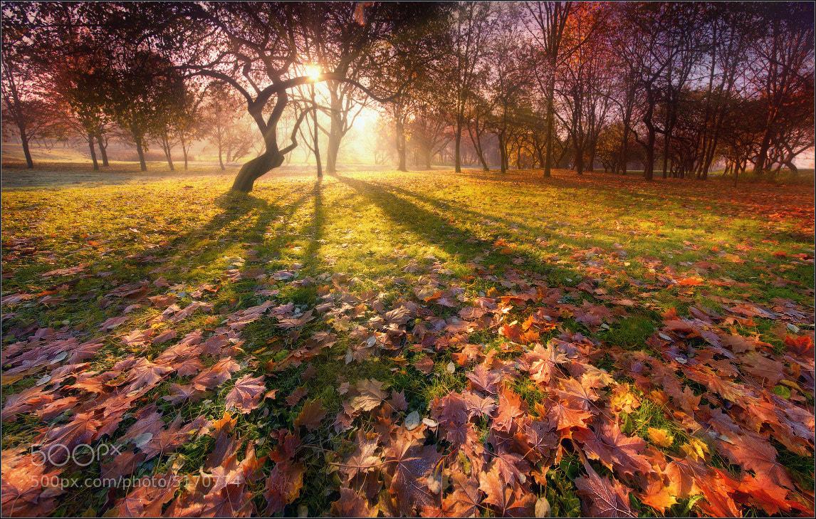 Photograph Silhouette of autumn/ Силуэт осени by Влад Соколовский  on 500px